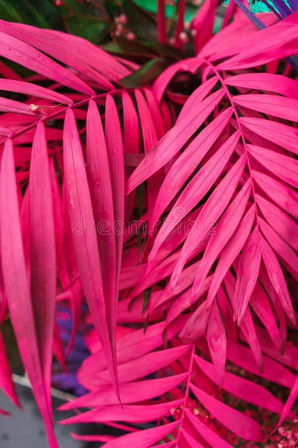 Decoration of tropical leaves painted in bright neon colors. Stylish psychedelic hallucinogenic decorations. Abstract background of palm leaves. Soft focus stock image