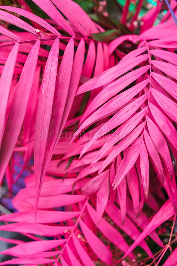 Decoration of tropical leaves painted in bright neon colors. royalty free stock images