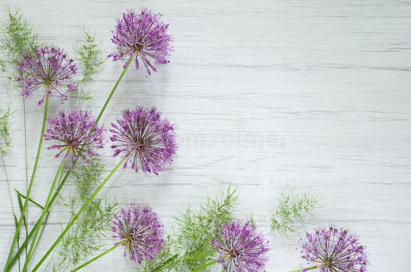 Decorative Allium onion purple flowers on stem and white wooden rustic table background. Beautiful spring background stock photography