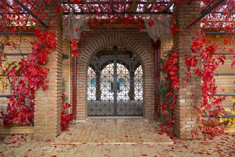 Decorative arched iron gateway through brick door to a garden. With decorated maiden grapes virginia creeper in fall stock image