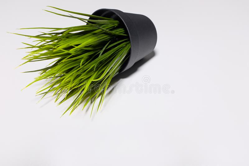 Decorative artificial green grass in plastic pot isolated on white background royalty free stock images