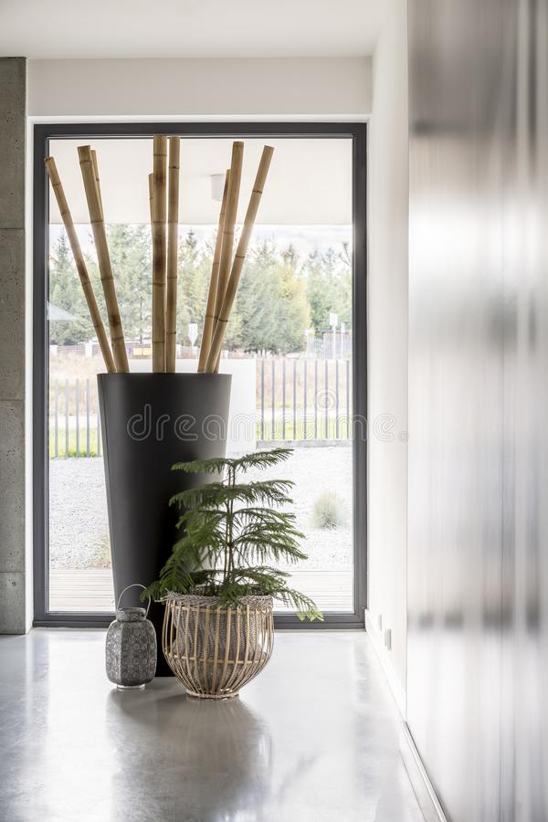 Well-known Bamboo poles in big vase stock image. Image of minimalism - 106962353 CY12