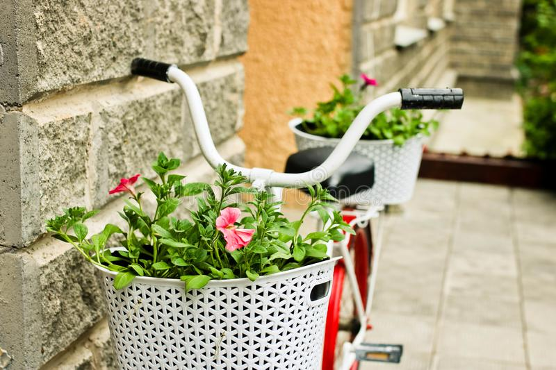 Decorative bike with flower baskets near the vintage building stock photo