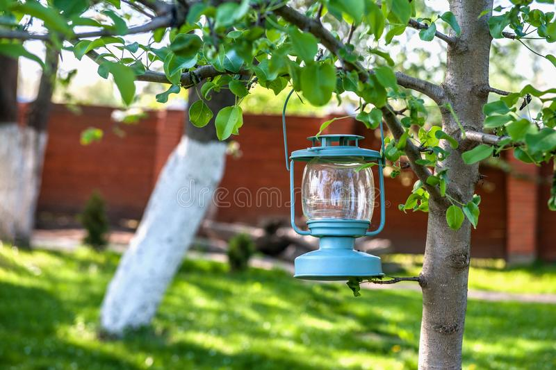 Decorative blue glass Lamp with candles hanging on a tree in the garden.  royalty free stock photos