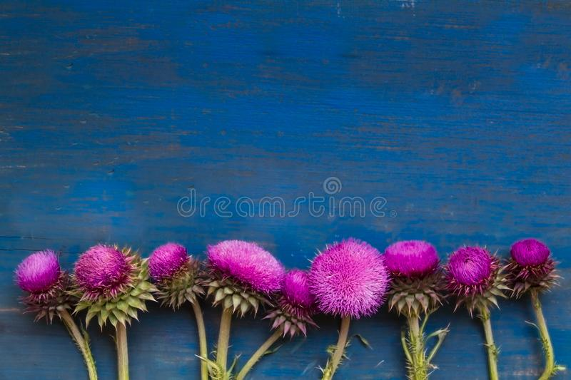 Decorative border with thistle flowers on blue rustic wood stock photography