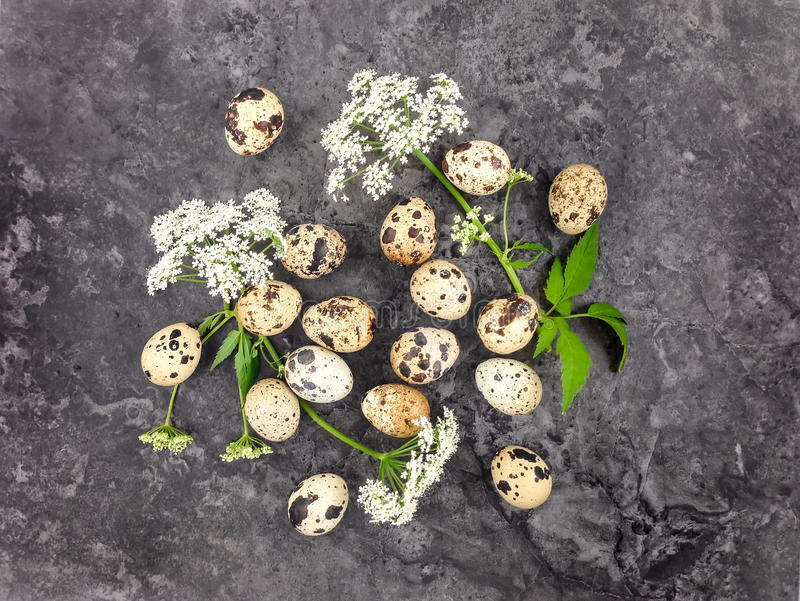 Decorative bright group of quail eggs with flowers on dark stone background. Flat lay stock image