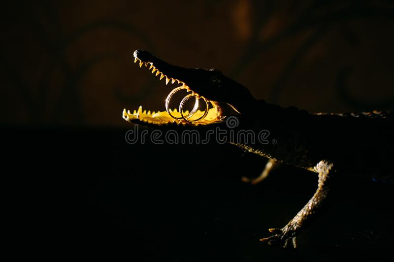 Decorative bronze figure of crocodile with wedding rings in the mouth, close-up. Concept of difficulties in the life of newlyweds. Unusual jewelry stock images