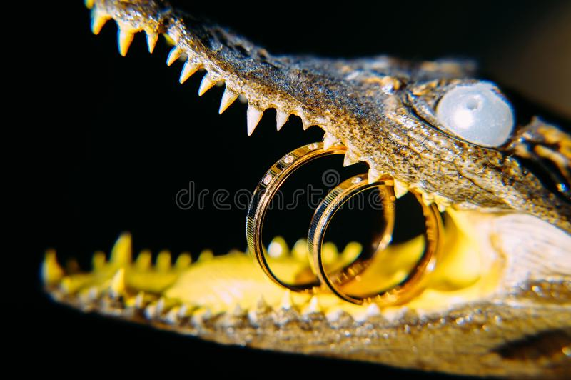 Decorative bronze figure of crocodile with wedding rings in the mouth, close-up. Concept of difficulties in the life of newlyweds. Unusual jewelry stock photos