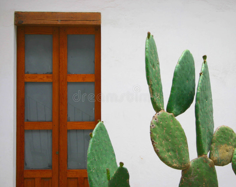 Decorative cactus stock photography