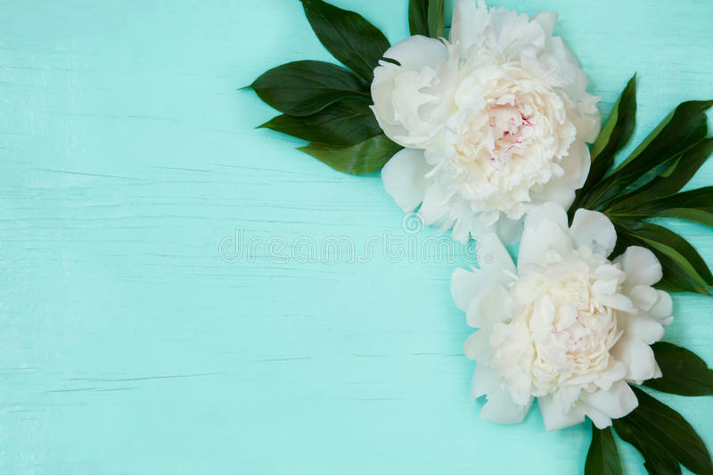 Decorative card with white peonies flowers. Lying on turquoise wood texture. Beautiful Horizontal background With Copy Space for invitation, congratulation. Top royalty free stock photos