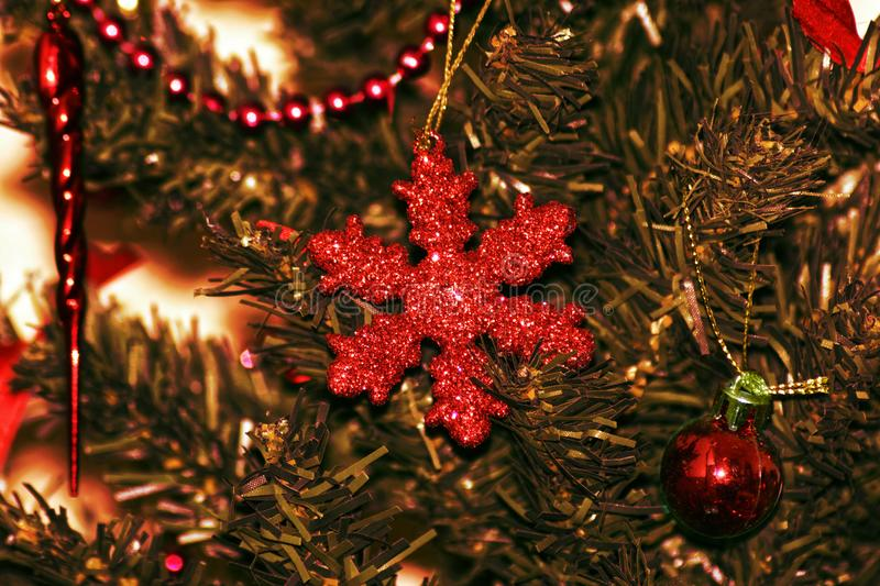 Christmas star on branches of coniferous tree royalty free stock image