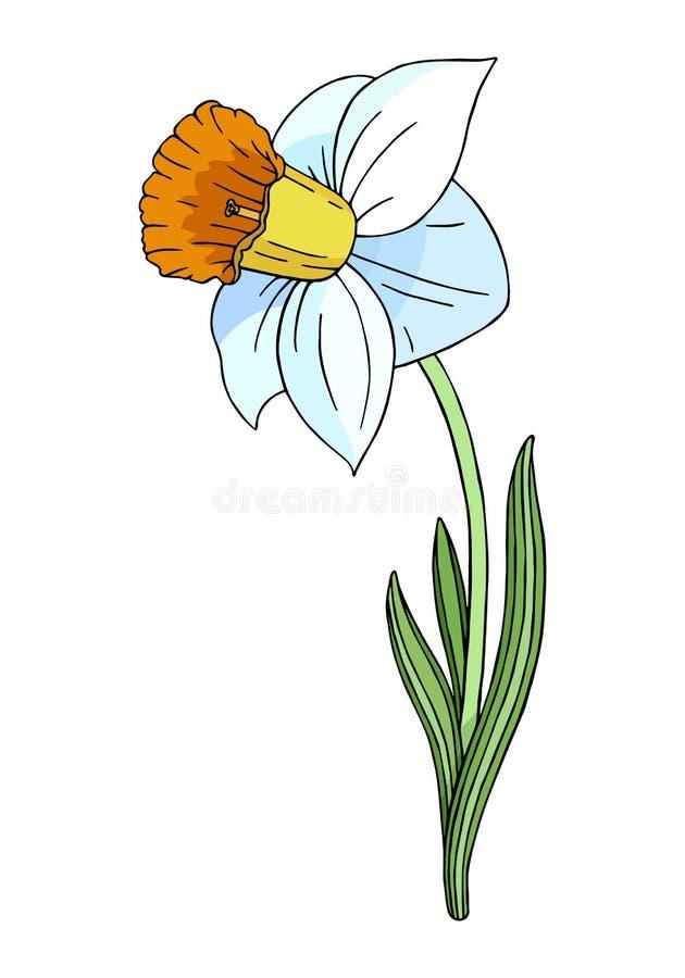 Decorative colorful Narcissus stock illustration