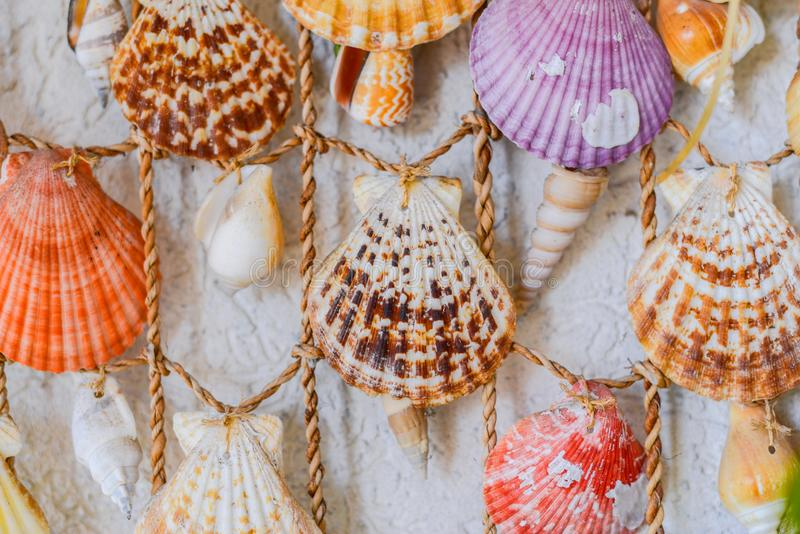 Decorative colorful seashells hanging on a white wall royalty free stock images
