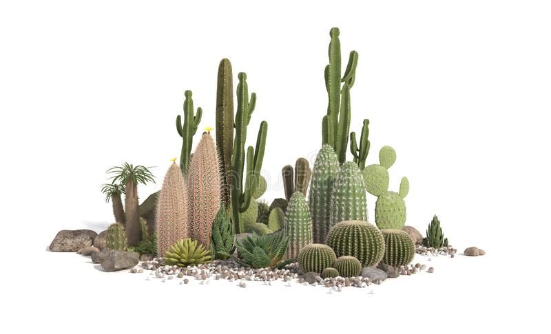 Decorative composition composed of groups of different species of cacti, aloe and succulent plants isolated on white background. vector illustration