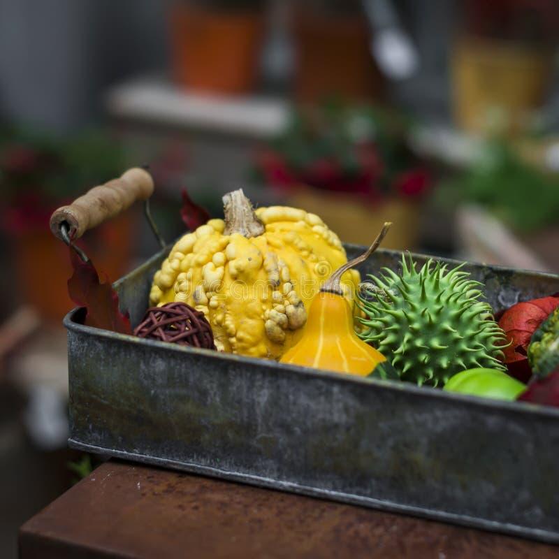 Decorative composition with pumpkins stock images