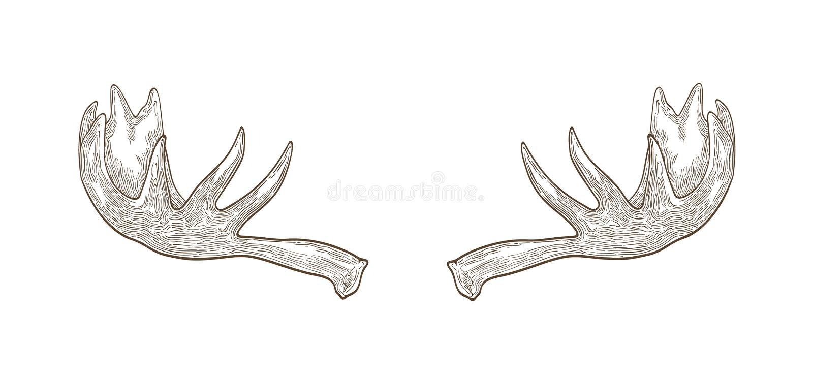 Decorative drawing of elk or moose palmate antlers. Trophy or haul hand drawn with contour lines on white background. Monochrome vector illustration in elegant vector illustration