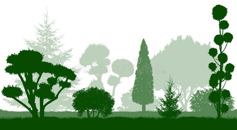 Decorative dwarf trees, garden conifers. Silhouettes. Vector illustration royalty free stock photography