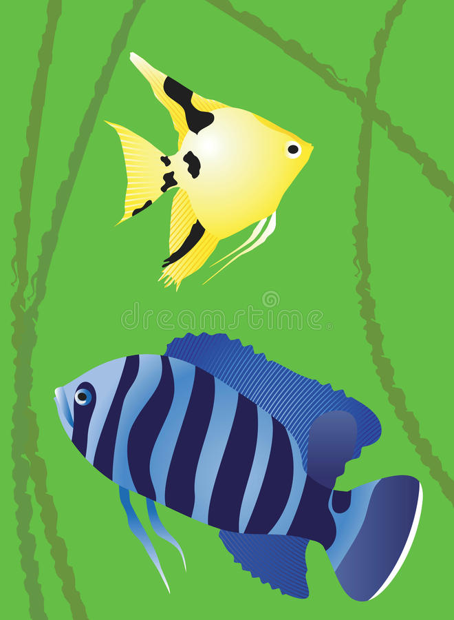 Download Decorative Fishes. Royalty Free Stock Images - Image: 24054209