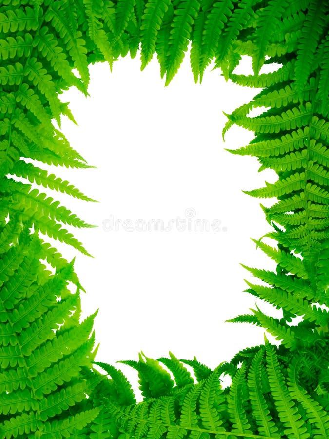 Decorative floral fern frame. Decorative floral fern leafs frame stock image