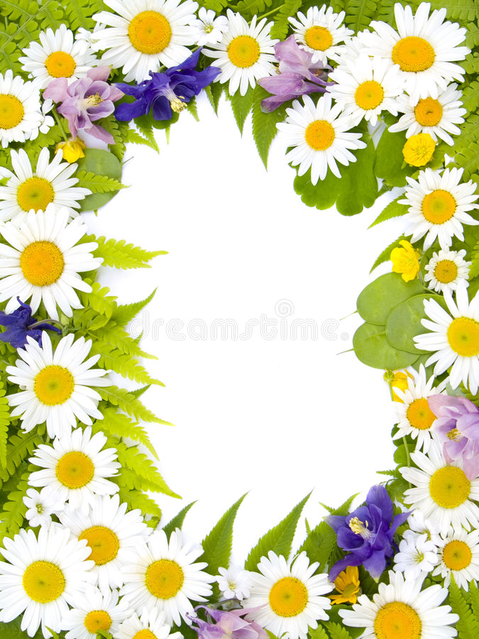 Decorative floral frame. With meadow flowers royalty free stock photography