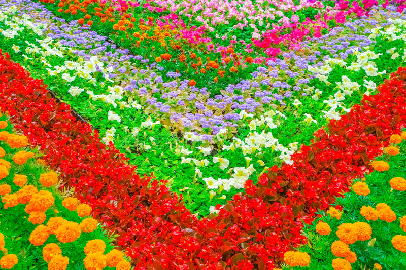 Decorative flower bed royalty free stock photos
