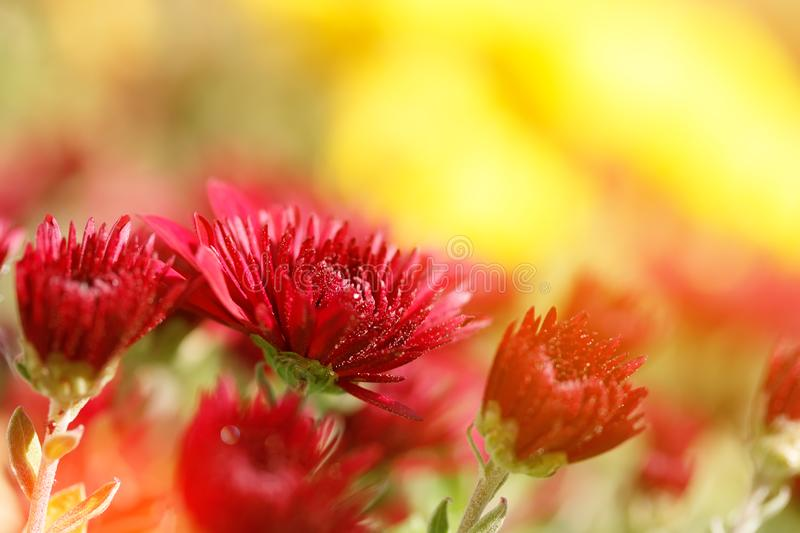 Decorative flowers with bokeh blurred background. / bright summer photo royalty free stock photo