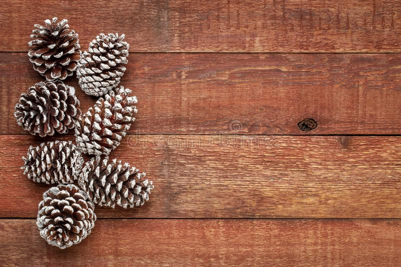 Pine cones on barn wood. Decorative, frosty white painted, pine cones on a weathered barn wood with a copy space stock photo