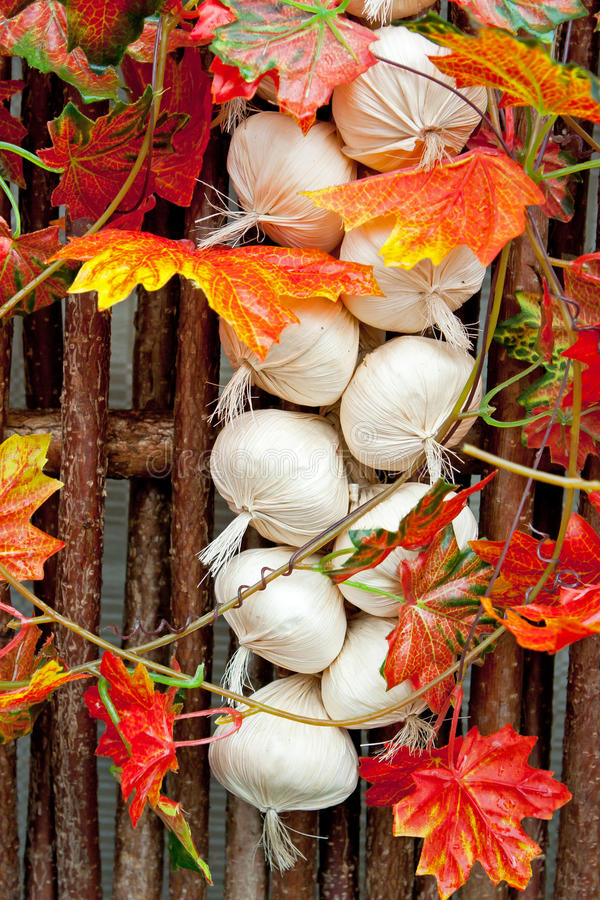 Download Decorative garlic braid stock photo. Image of decorative - 23803662