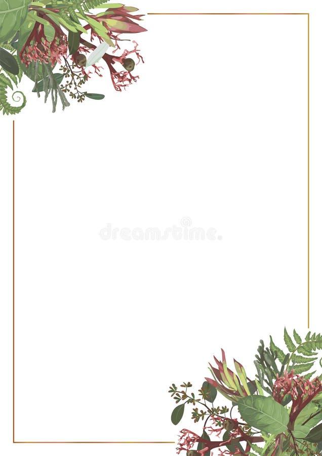 Decorative golden rectangular frame with Brunia, fern, eucalyptus, leucadendron, gaultheria, salal, jatropha. For wedding. Decorative golden rectangular frame vector illustration