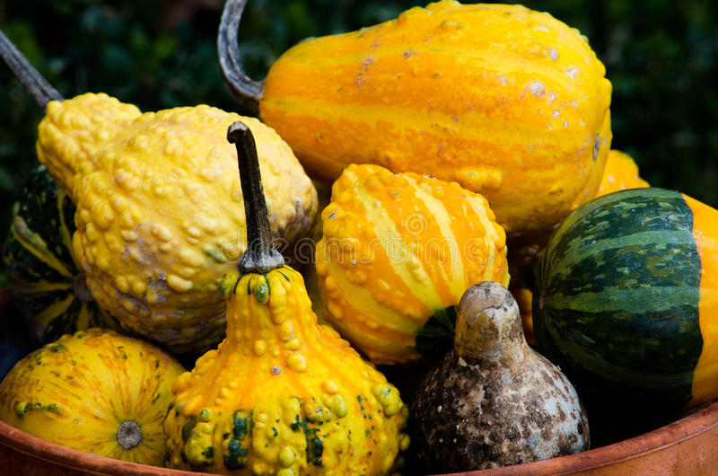 Decorative gourds in a clay pot royalty free stock photo