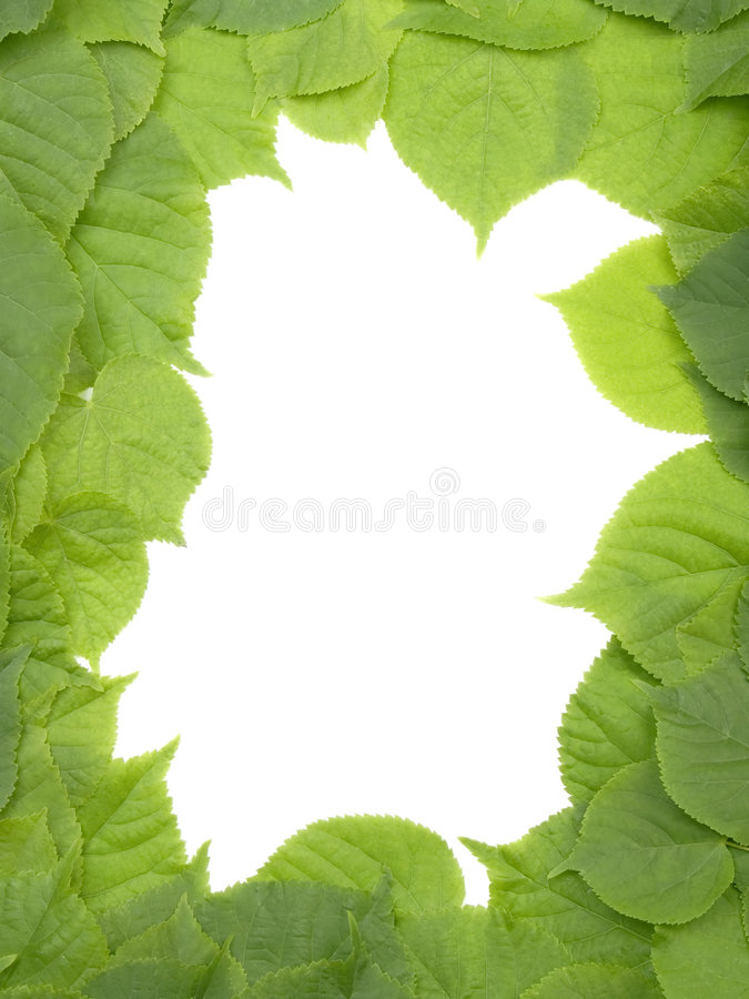 Decorative greeen leafs frame. Isolated on white royalty free stock photos