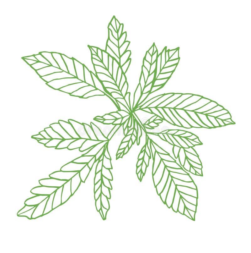 Decorative green branch of little hemp with leaves. Decorative illustration of Little green branch hemp on white background royalty free illustration