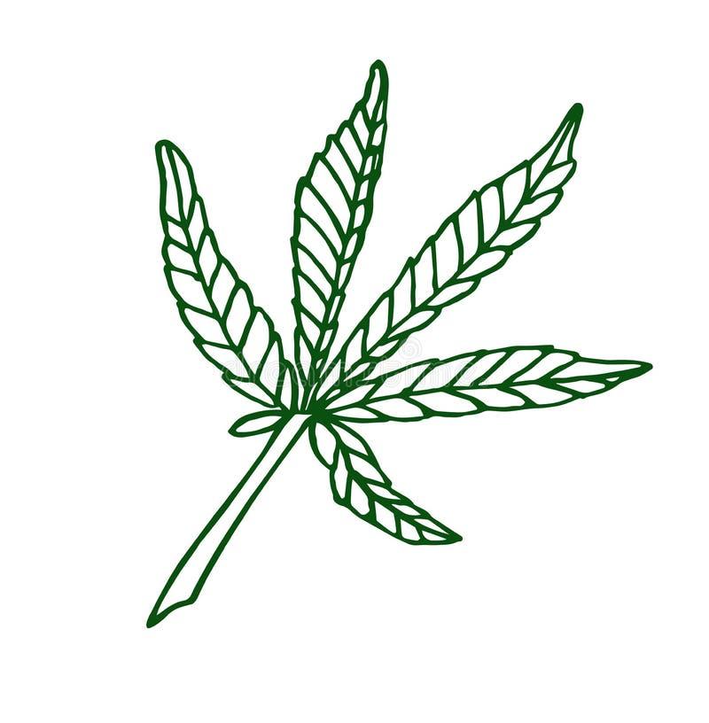 Decorative green illustration leave of big hemp. Decorative illustration leave of big green hemp on white background royalty free illustration