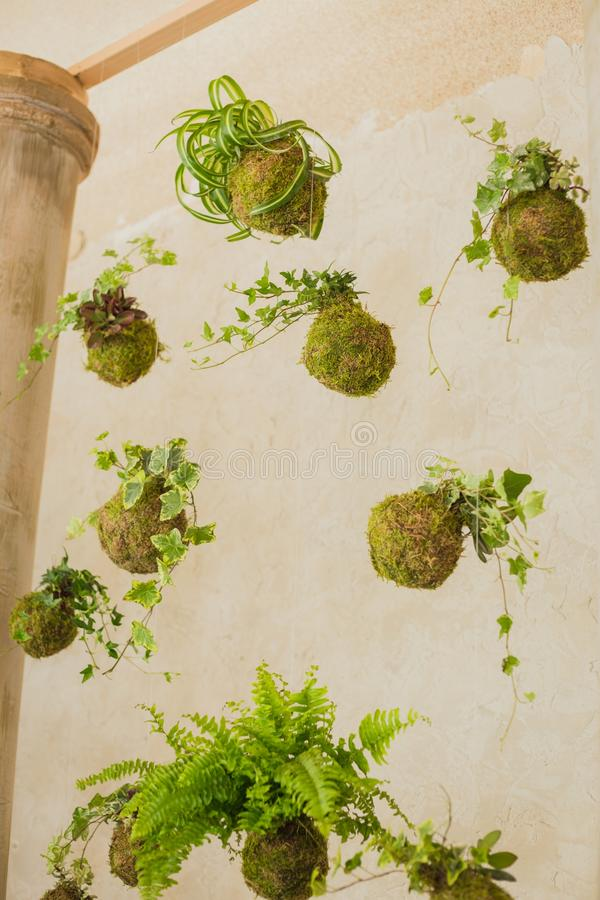 Decorative green shrub in form of ball. Decor royalty free stock image