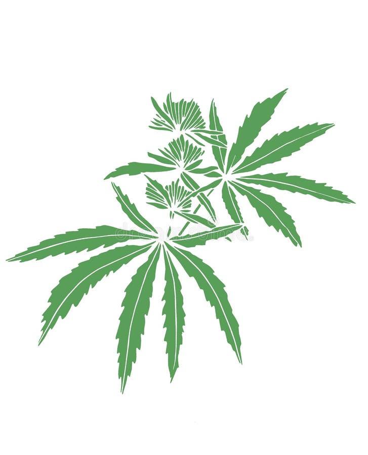 Decorative green trafaret branch of big hemp with leaves. Decorative green trafaret of big branch hemp on white background royalty free illustration