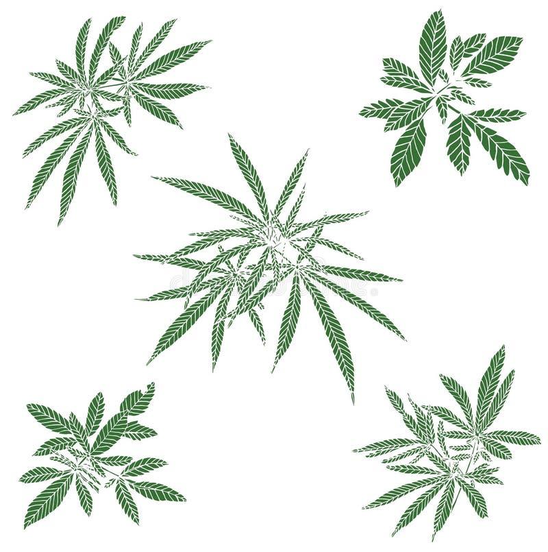 Decorative green trafaret set branch of big hemp. On white background vector illustration