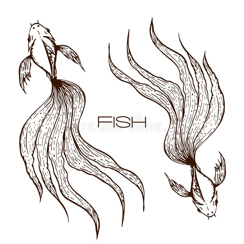 Decorative hand drawn koi or betta or goldfish illustration. sketched line fish graphic. two long wavy tailed fishes concept on. White. engraved illustration of stock illustration