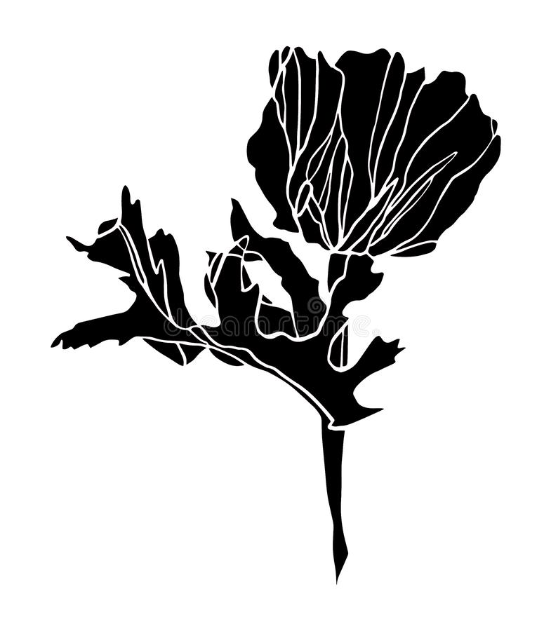 Decorative ink drawing black poppy flower with leaves stock photos