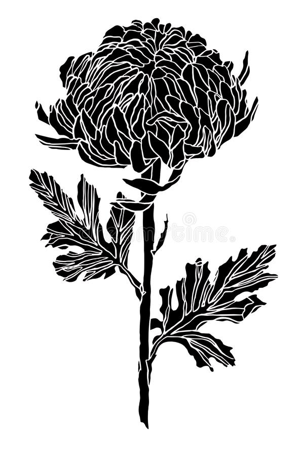 Decorative ink drawing chrysanthemum flower and leaves royalty free stock images