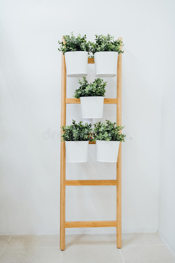 A decorative ladder plant stand to grow several plants together vertically. stock image