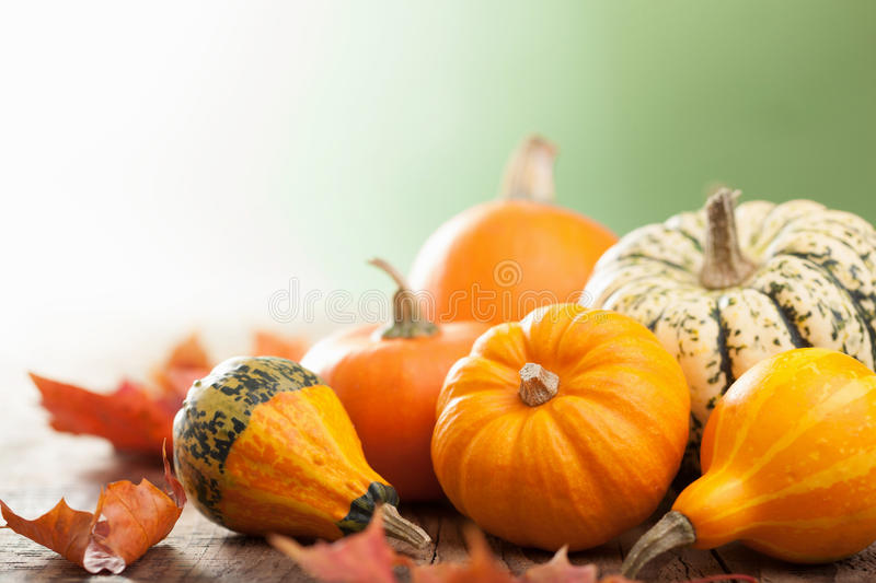 Decorative mini pumpkins on wooden background royalty free stock photography