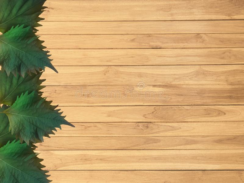 Oba leaves on wooden boards. Decorative Oba leaves placed on brown wooden boards royalty free stock photography