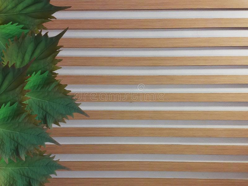 Oba leaves on wooden fence. Decorative Oba leaves placed on brown wooden fence royalty free stock images
