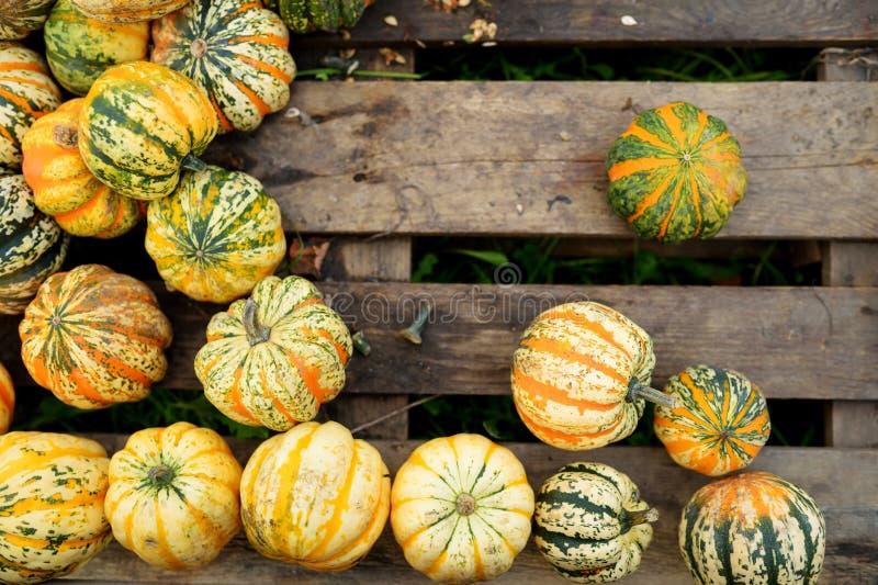 Decorative orange pumpkins on display at the farmers market in Germany. Orange ornamental pumpkins in sunlight stock photography