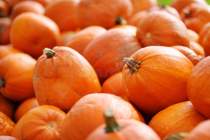 Decorative orange pumpkins on display at the farmers market in Germany. Yellow-green striped ornamental pumpkins in sunlight. stock photo