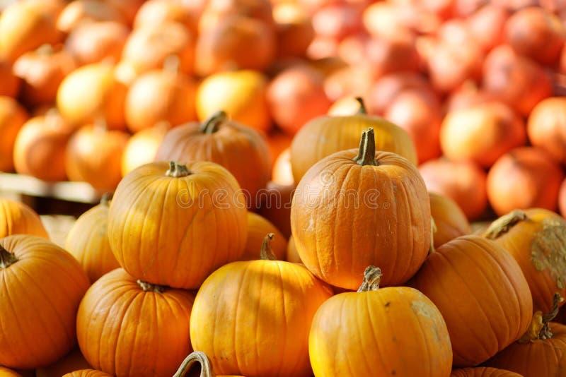 Decorative orange pumpkins on display at the farmers market in Germany. Orange ornamental pumpkins in sunlight stock images