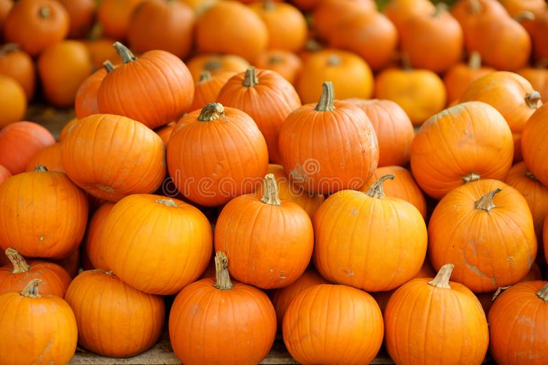 Decorative orange pumpkins on display at the farmers market in Germany. Orange ornamental pumpkins in sunlight royalty free stock photography