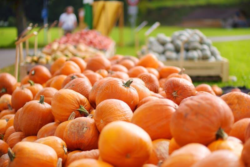 Decorative orange pumpkins on display at the farmers market in Germany. Orange ornamental pumpkins in sunlight royalty free stock image