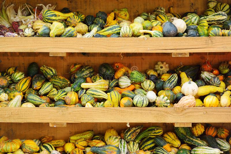 Decorative orange pumpkins on display at the farmers market in Germany. Yellow-green striped ornamental pumpkins in sunlight. stock photos
