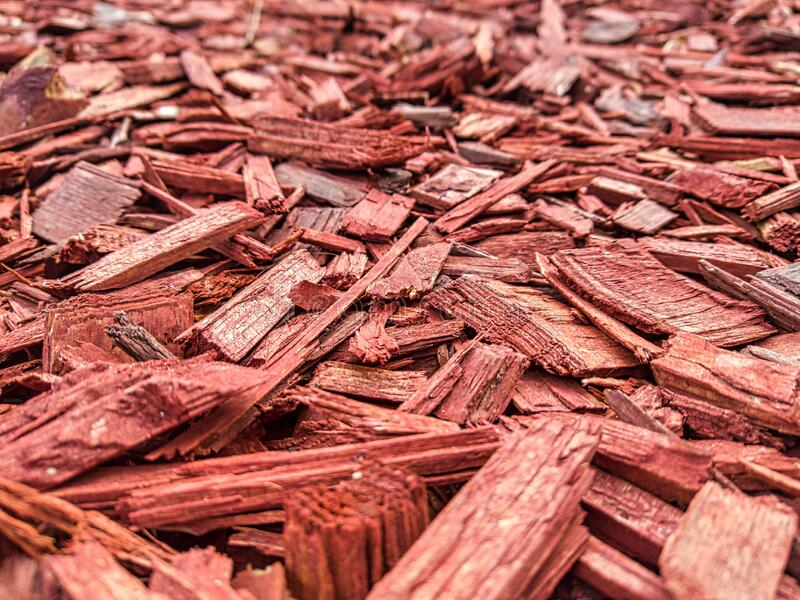 decorative painted pine mulch mulching flowerbeds close up selective focus picture decorative pine chips red mulch 196990360